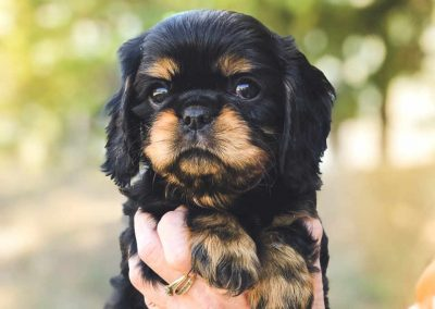 black-tan-4weeks-960x1080